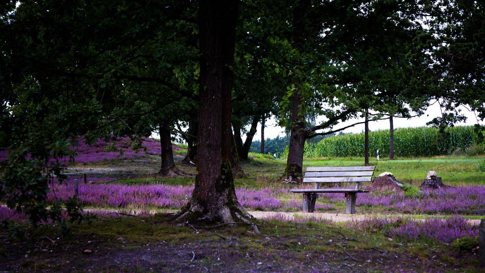 Beispiel für Landschaftsbild in der Lüneburger Heide