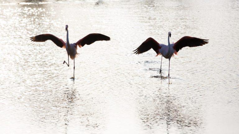 Wildtierfotografie Kamera