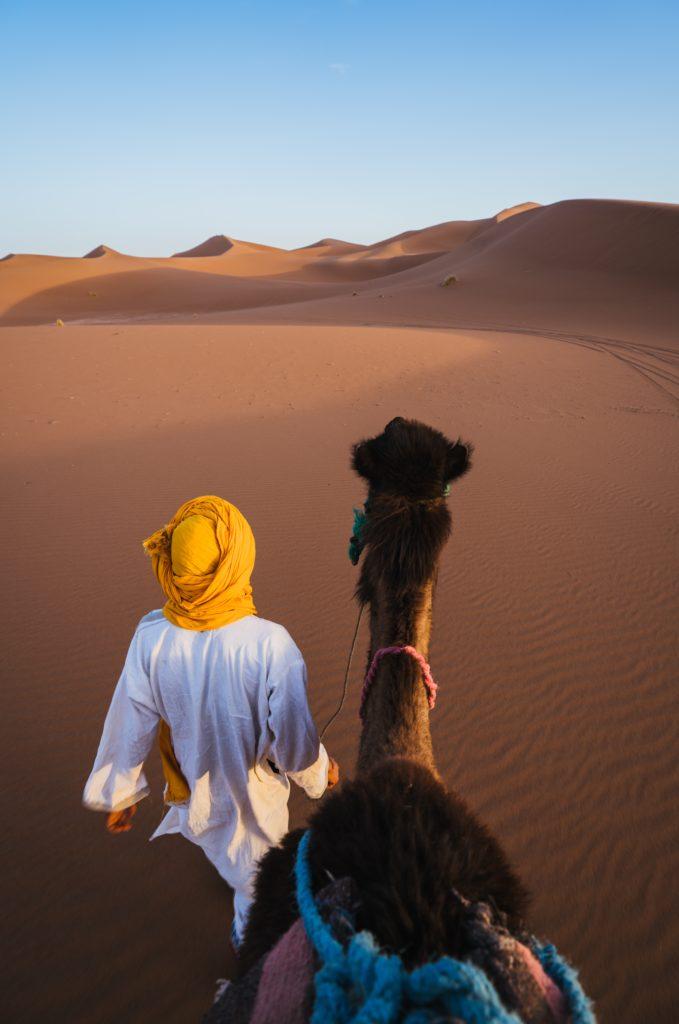 Fotografieren Wüste Kamel