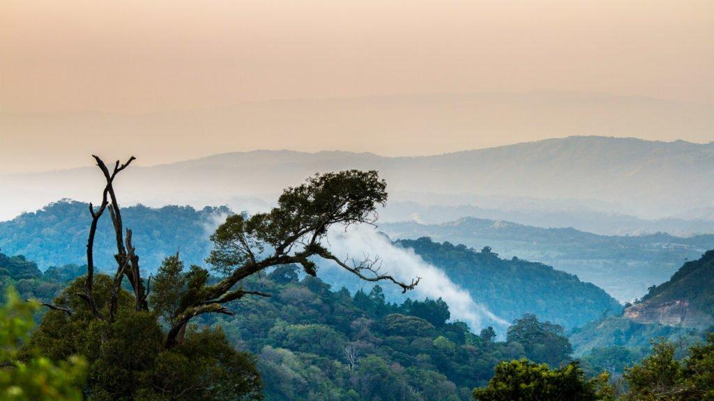 Fotografieren im Dschungel