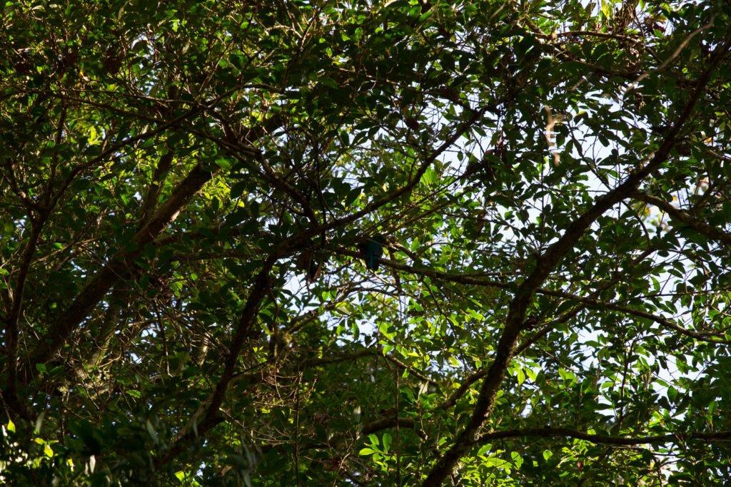 Fehler bei Fotografieren im Dschungel