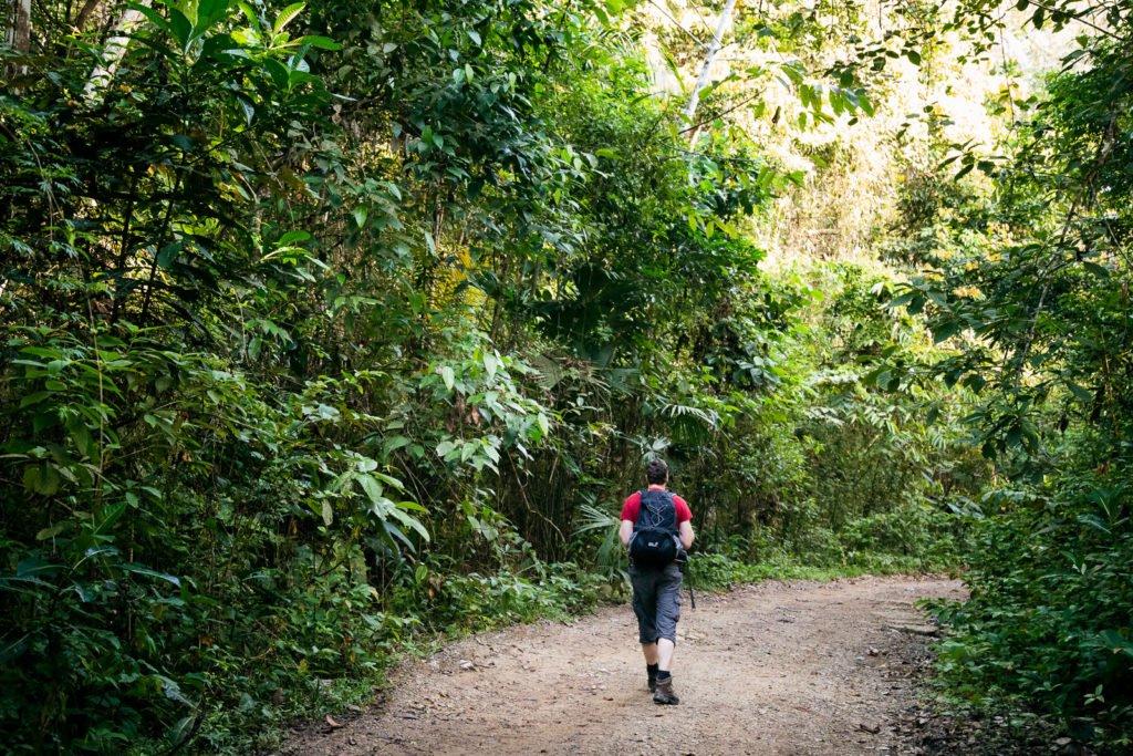 Wandern im Dschungel