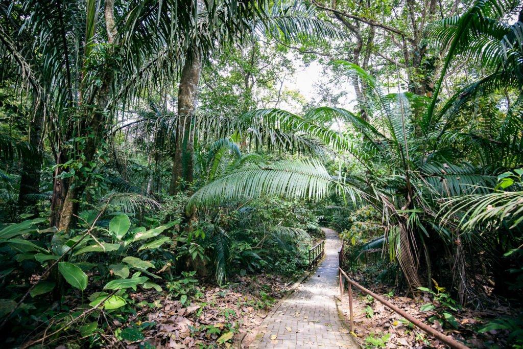 Der kürzeste Wanderweg im Soberania Nationalpark. Der Natural Pond Trail.