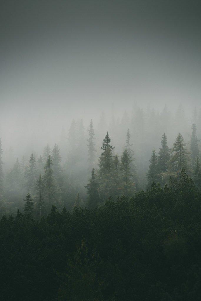 Fotografie Nebel