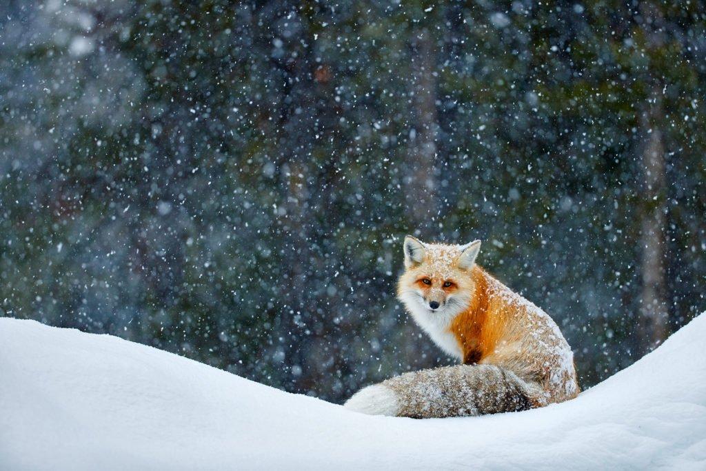 Fotoblog von Radomir Jakubowski